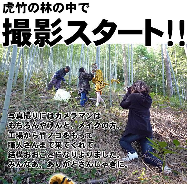 虎竹の林の中で撮影スタート!!