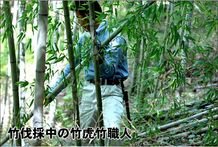 竹伐採中の竹虎竹職人