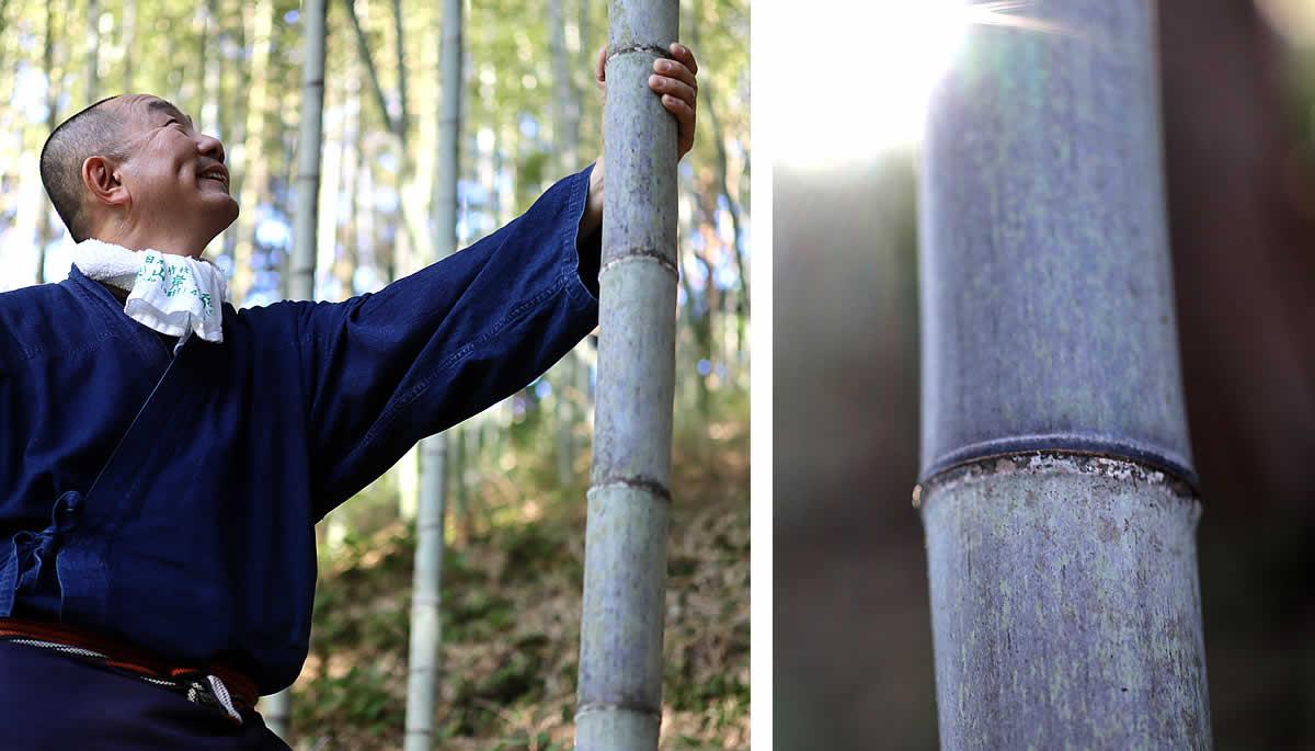虎竹御守り福音鈴、竹の生命力