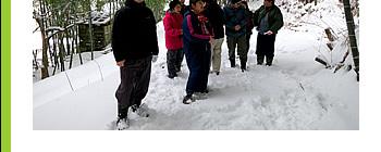 雪の竹林見学