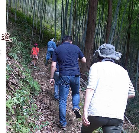 日本唯一の虎竹の林。