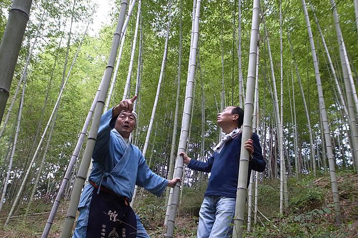 虎竹が一面にひろがる竹林,竹虎四代目(山岸義浩、YOSHIHIRO YAMAGISHI、TAKETORA)