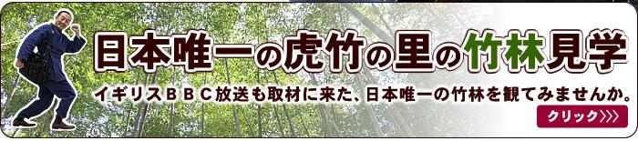 日本唯一の竹林見学