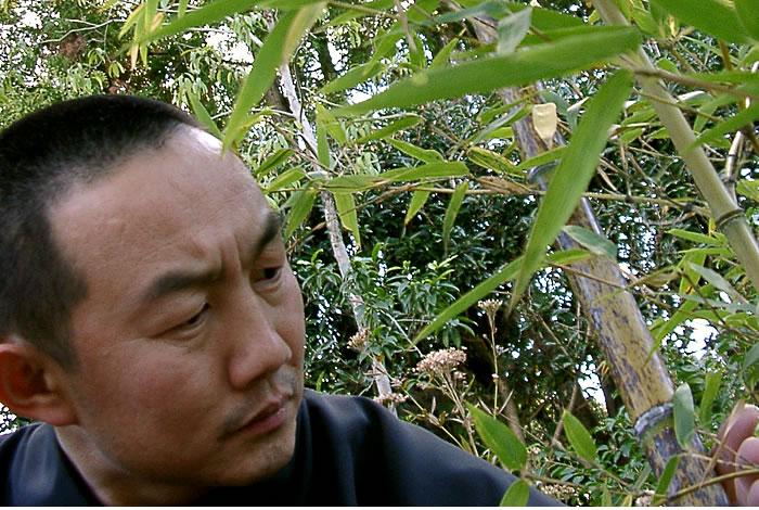 虎竹を見る純信