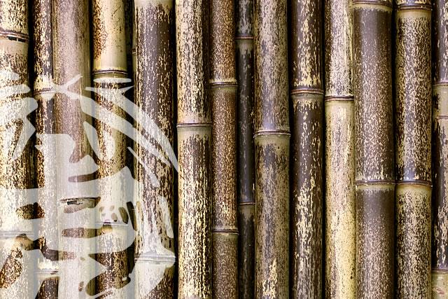 日本唯一虎竹部
