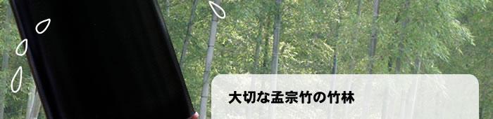 大切な孟宗竹の竹林