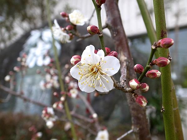 春がやってきています