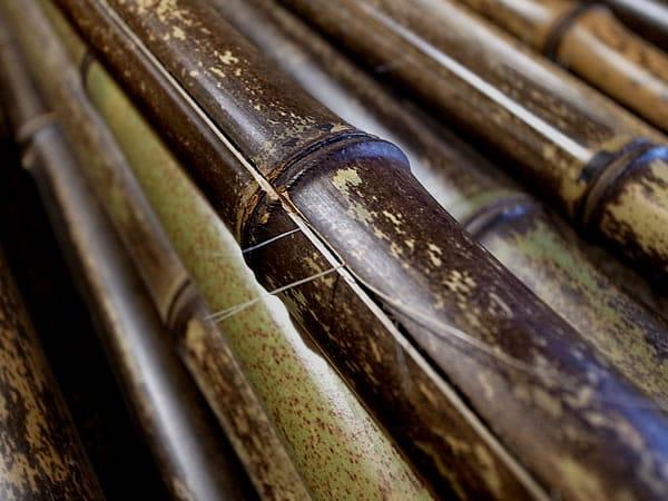 竹と向き合う