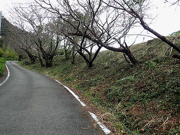 山道,虎竹の里,高知県須崎市安和