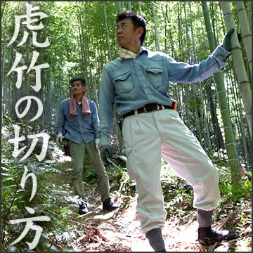 虎竹の伐採方法(竹の切り方)