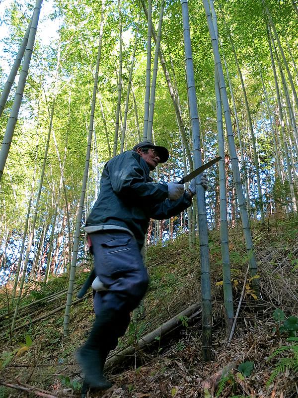 魅力いっぱい!?日本唯一の竹林