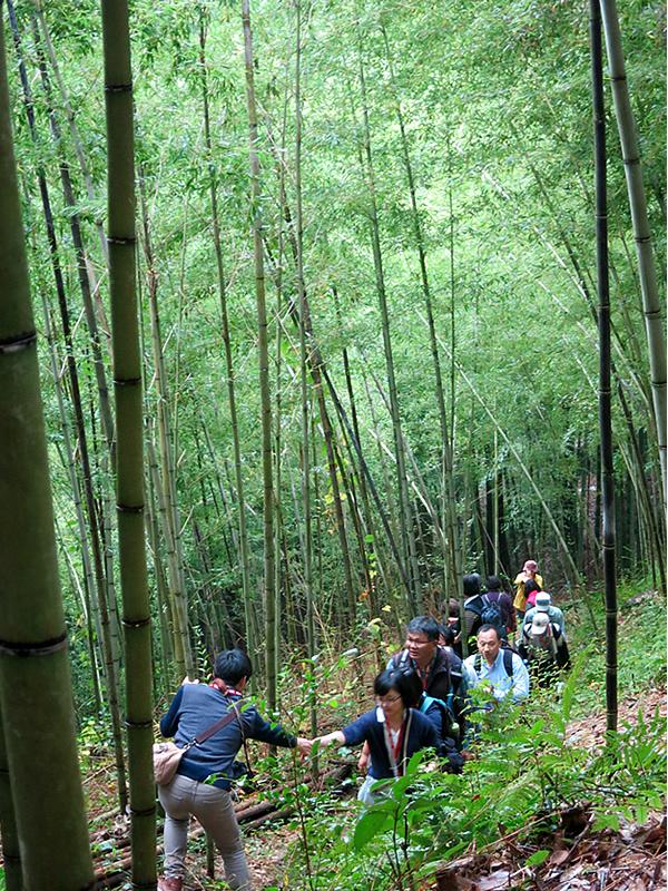国立台湾工芸研究発展センター,竹林見学,虎竹の里