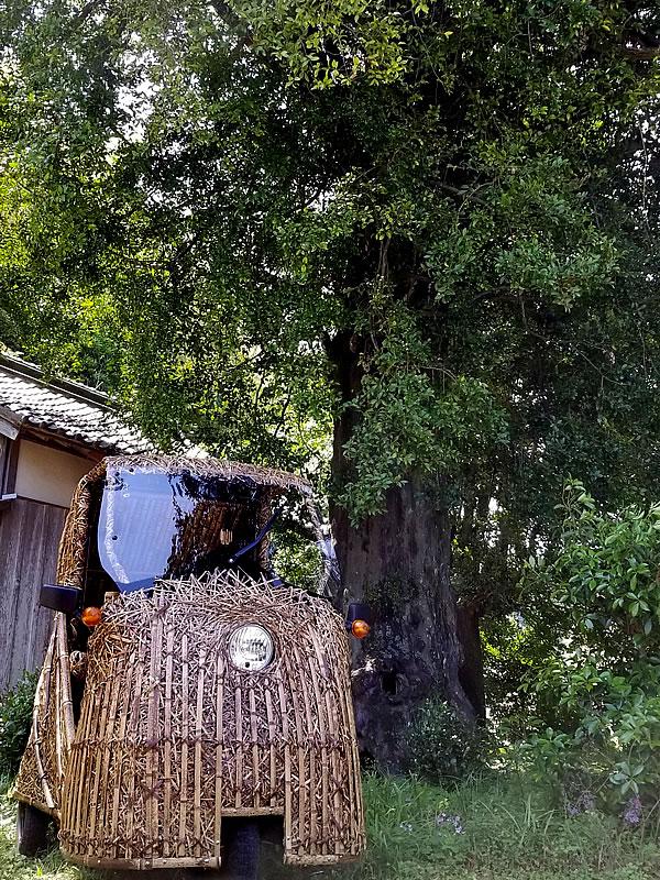 竹トラッカー、安和の大ナギの木