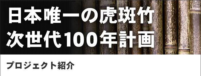 日本唯一の虎斑竹、次世代100年計画